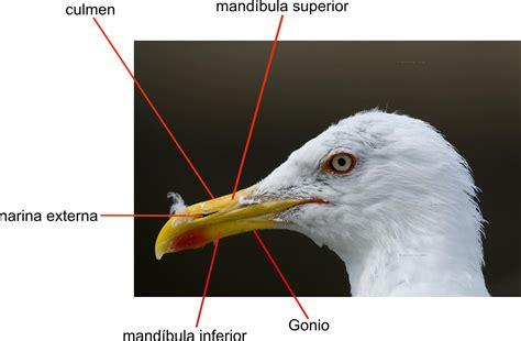 El pico de las aves | sobreaves.com