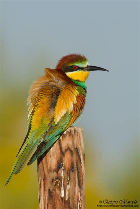 El píxel del bosque: Arranca el III Atlas de aves ...