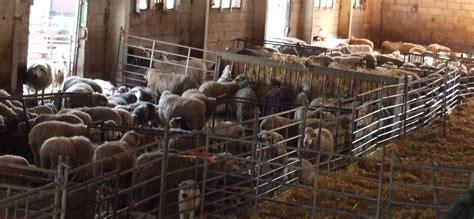 El problema para el sector de la ganadería vendrá después ...