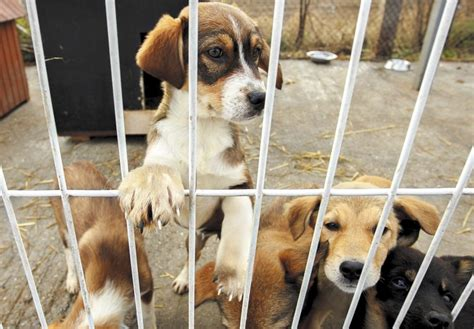 El refugio de animales de Valencia cerrado, para nuevos ...