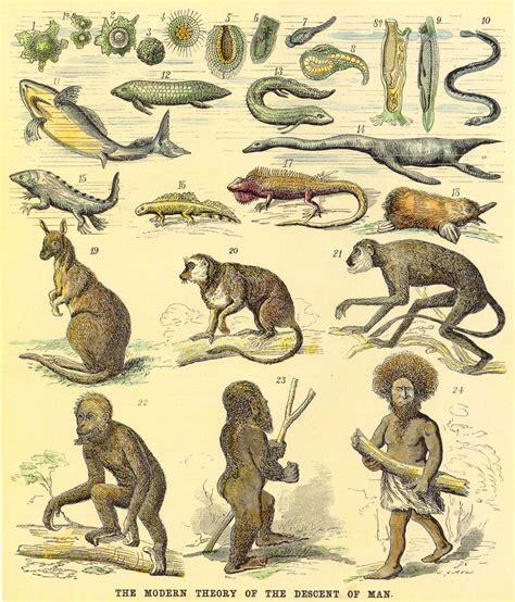El Shanti: ¿Tenía Darwin razón?
