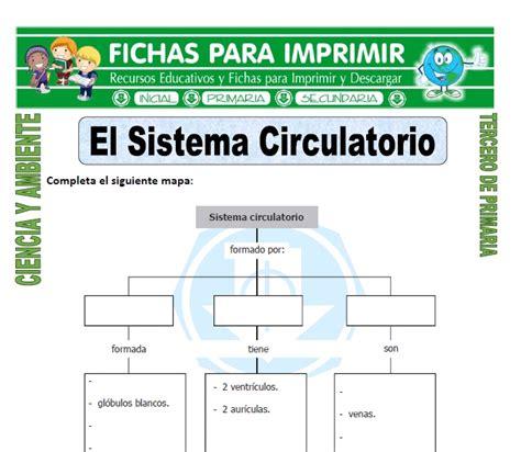 El Sistema Circulatorio para Tercero de Primaria   Fichas ...