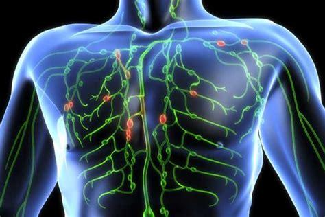 El Sistema Linfático: Esencial Para La Buena Salud ...