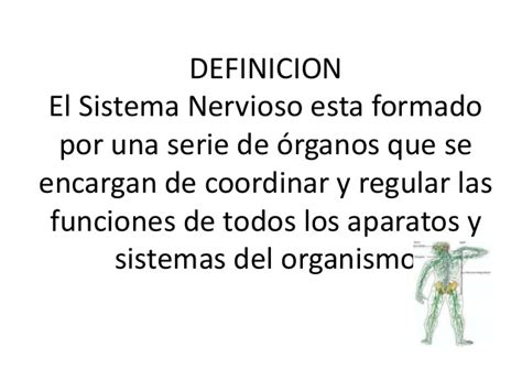 El sistema nervioso estructuradiapositivas