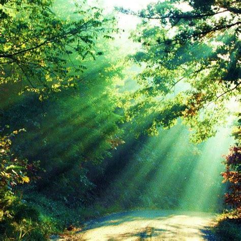 El Sonido De La Naturaleza..los Pajaros Música De ...