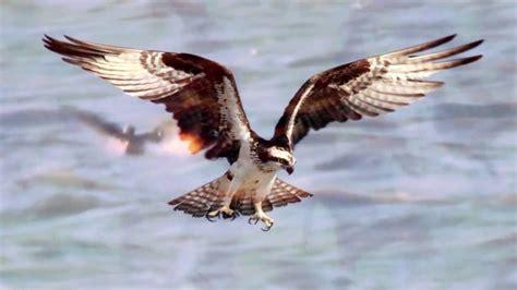 El vuelo de las aves DOCUMENTALES DE NATURALEZA   YouTube