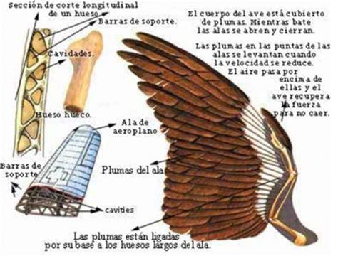 El Vuelo de las Aves; Extremidades Anteriores | marialuciac