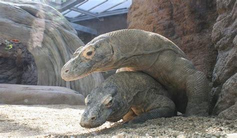 El Zoo de Barcelona completa con éxito el apareamiento de ...