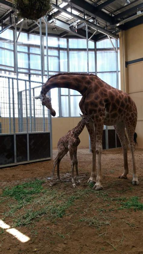 El Zoo de Barcelona lanza una campaña para cambiar la ...