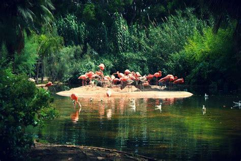 El zoo de Barcelona para un día de diversión familiar ...