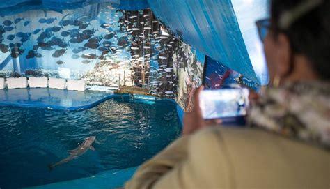 El zoo de Barcelona perd 180.000 visitants en dos anys ...