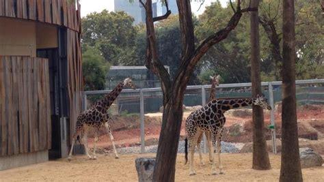 El Zoo de Barcelona prevé reabrir en junio o julio y ...