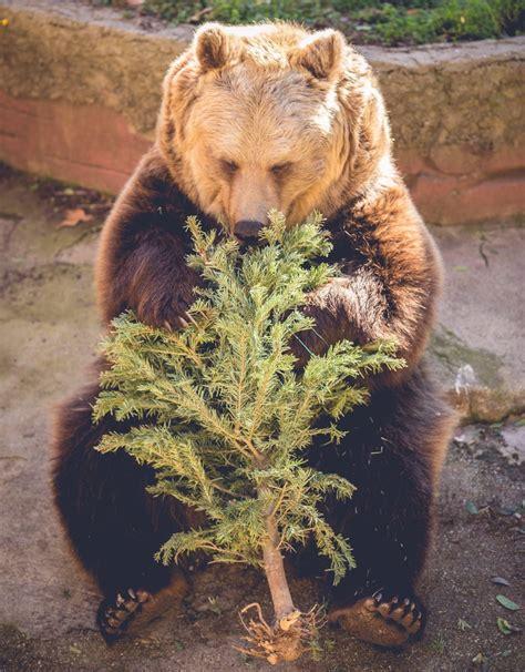 El Zoo de Barcelona reutiliza restos de poda y árboles de ...