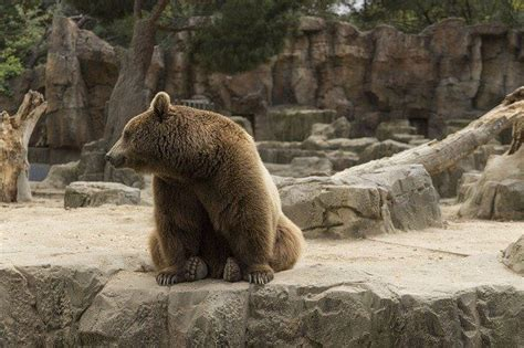 El zoo de Madrid o Zoo Aquarium de Madrid.   Ahorra y Viaja