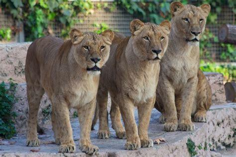 El Zoológico de Barcelona | Qué ver | Horario y precio