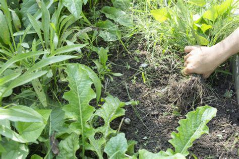 Elabora tu propio herbicida casero. ¡Disfruta sin peligro ...
