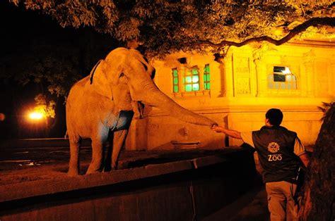 Elefantes en el Zoo de Noche | Zoo, Elefantes, Animales