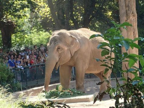 Elephant at the Zoo in Rome.   Picture of Bioparco, Rome ...