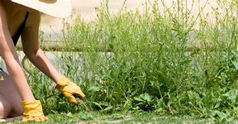 Eliminar las malas hierbas   Remedios Ecológicos ...
