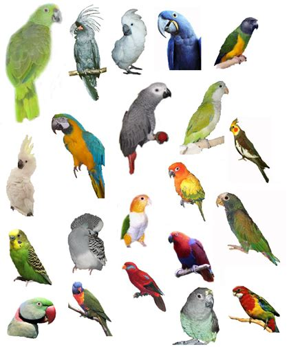 Elite Parrots Club   Parrot   Parrot Training   Learn how ...