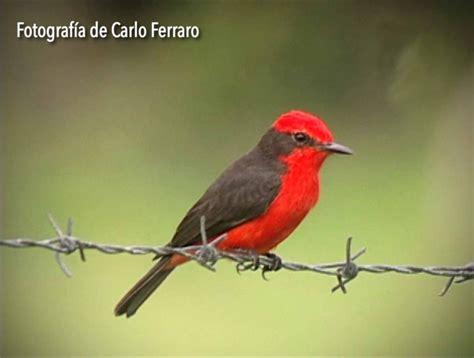 Ellas son las aves insectívoras  FOTOS + VIDEO  # ...