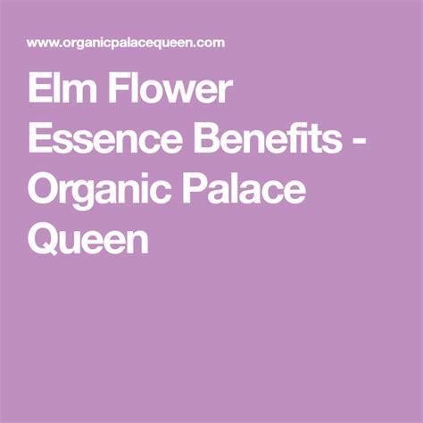 Elm Flower Essence Benefits | Benefit, Organic, Flowers