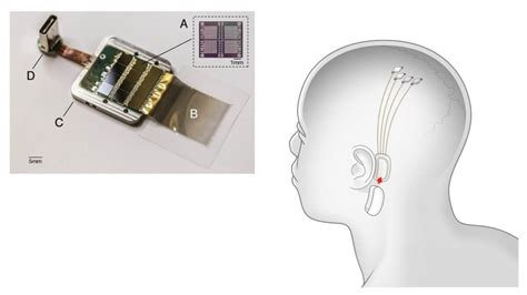 Elon Musk s Neuralink aims to implant mind reading sensors ...