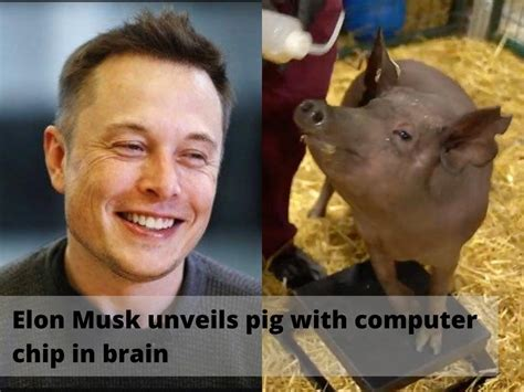 Elon Musk Unveils Pig With Computer Chip In Brain ...