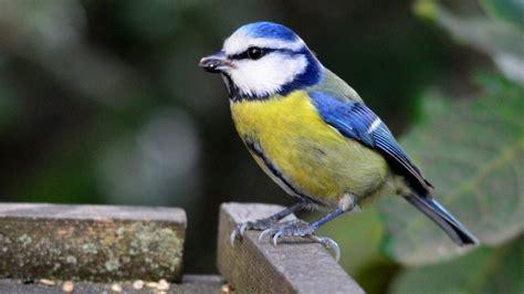 Els ocells a l'hivern – Benvinguts al Parc Natural Collserola