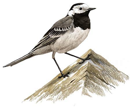 Els ocells, cada cop més presents a l'entorn de les ...
