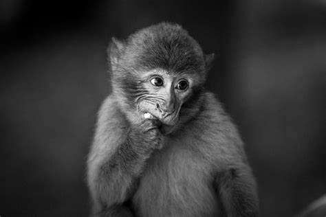Employee Engagement Surveys, Run by Monkeys?   Ethelo