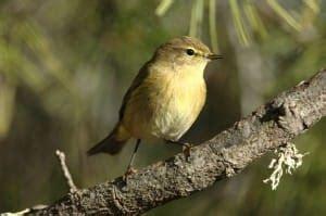 En Barcelona habitan 83 especies diferentes de pájaros ...