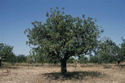En BAYER te ayudamos a preparar tu olivar para una buena ...