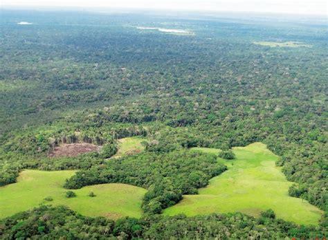 En Brasil, la selva amazónica continúa cediendo a la ...