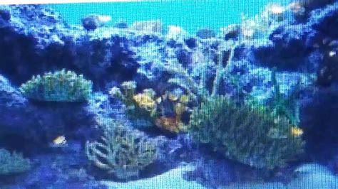 En el fondo del mar. Lo profundo del oceano. Algas ...