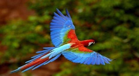 En fotos: 10 aves que están en peligro de desaparecer ...