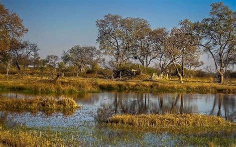 Enchanting Moremi Reserve in Botswana