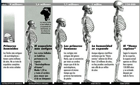 Encuentra aquí información de Evolución biológica para tu ...