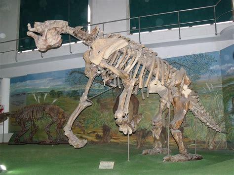 Encuentran restos de un  perezoso gigante  de 500 mil años ...