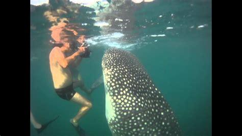 encuentro con gigante. Tiburon ballena.   YouTube