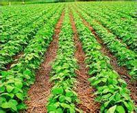 endefensadeangelito: Circuito productivo de la soja