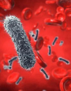 Enfermedades de la sangre: noticias y artículos