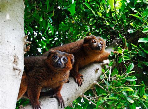 Enjoy these fantastic animals in their natural habitat in ...