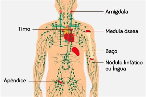Entenda como o câncer linfático acontece   Tua Saúde