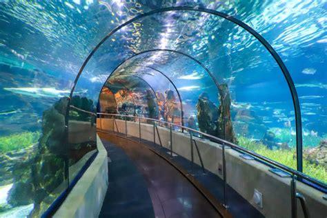 Entrada a L'Aquàrium de Barcelona   Reserva en Civitatis.com