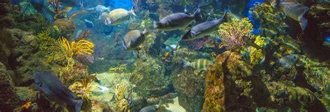 Entrada al Aquarium de Barcelona   Disfruta Barcelona