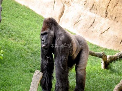 Entrada al zoológico Biopark de Fuengirola adultos ...