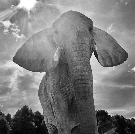 Entrada de Adulto | Safari Aitana