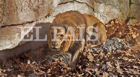 Entrada Zoo Barcelona 2x1   SEO POSITIVO
