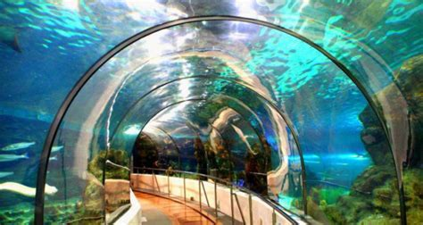 Entradas Al Zoo Barcelona 2x1   SEONegativo.com